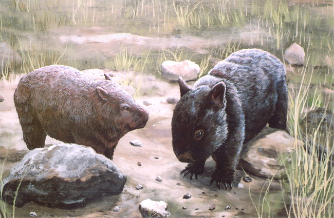 Wombat - Click to Return to Gallery