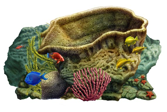 small coral reef - Click to Return to Gallery