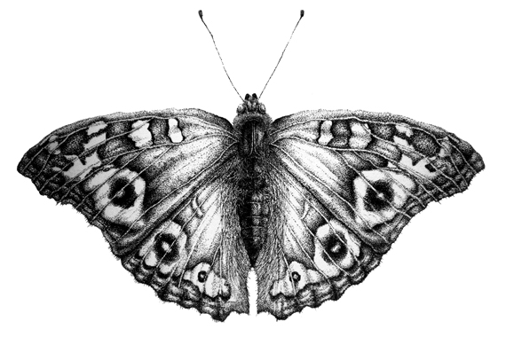 Butterfly - Click to Return to Gallery